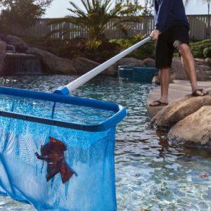 pool service scottsdale