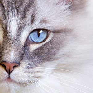 buying cat insurance online